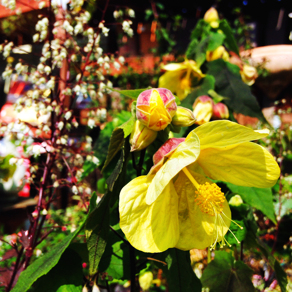 flower-edited-1200x1200