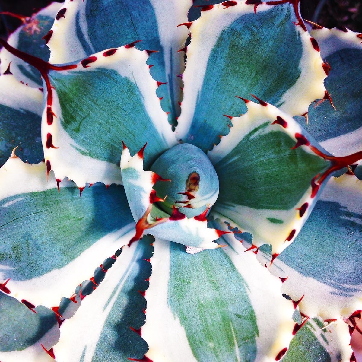 succulent-edited-1200x1200